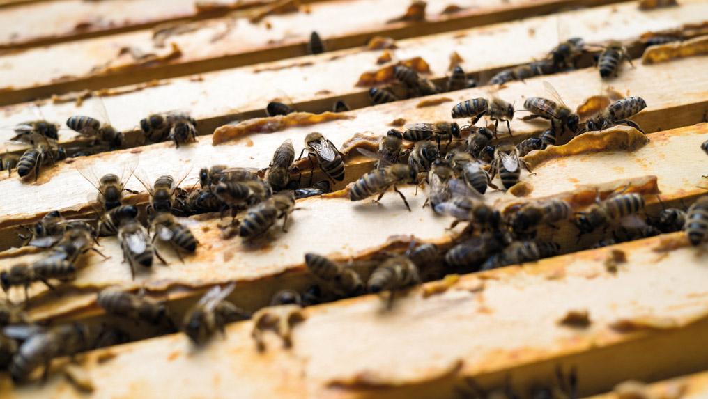 Newsbeitrag-Bienen2