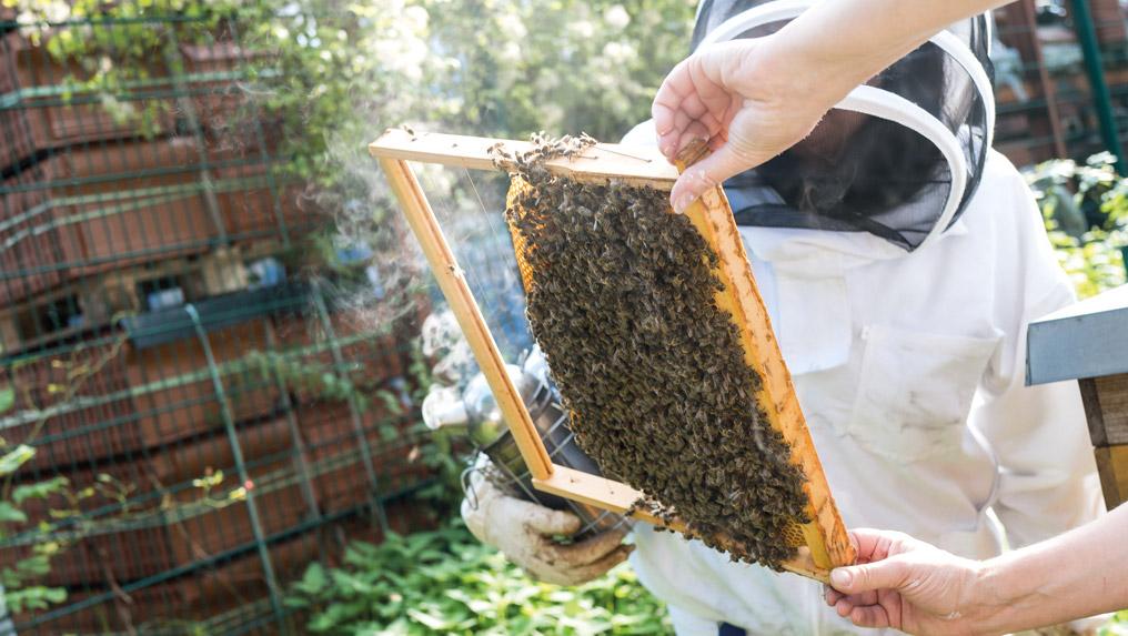 Newsbeitrag-Bienen3