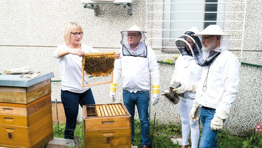 Newsbeitrag-Bienen4